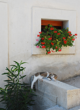 catnap: A white and brown-grey tabby cat sleeps in the shade to ecape the heat of the summer day in the central Istrian village of Pican, western Croatia Stock Photo