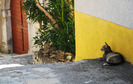 lonliness: A grey tabby street cat in the Croatian coastal town of Bakar. The town is full of street cats who the locals regularly feed.