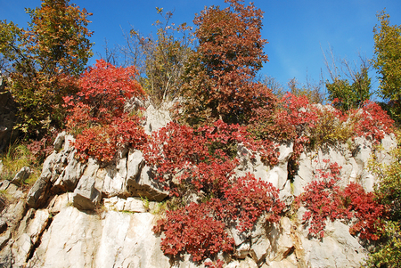 enriched: Autumn colours on display in the Carso Karst area of Friuli, north east Italy. The colours are enriched by the low afternoon sun on a perfect blue sky day.