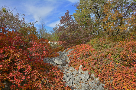 Herfstkleuren op het beeldscherm van Carso karst in Friuli, in de buurt van Aurisina in het noordoosten van Italië.