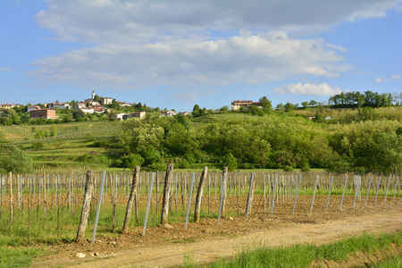 viniculture: The late April rural landscape around the western Slovenian town of Dobrovo.