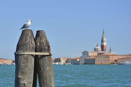 A seagull sits on mooring piles with background including the church San Giorgio Maggiore Editorial