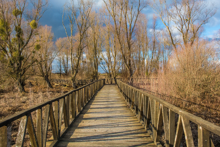 A wooden walkway in the Kopacki Rit Nature Reserve in winter in north east Croatia. Located by the Serbian border, close to the confluence of the Drava and Danube rivers, it is one of the largest and  写真素材
