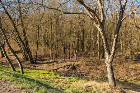 An area of woodland by the village of Cigoc in Sisak-Moslavina County in central Croatia