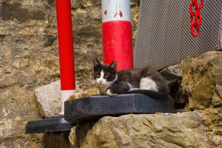 A feral kitten in the grounds of the 15th century Rumeli Hisari fort in the Sariyer district of Istanbul, Turkey