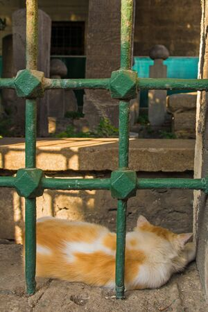 A street cat sleeps in a cemetery in the Sultanahmet district of Istanbul, Turkey