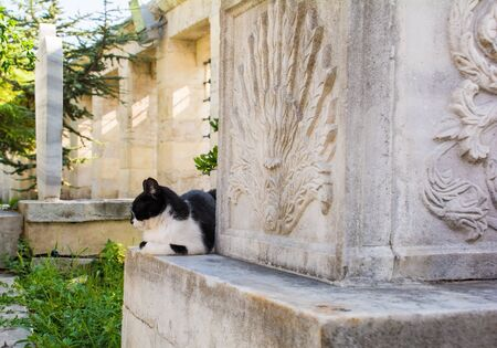 A resident street cat sleeps in the graveyard of Fatih mosque, Istanbul, Turkey