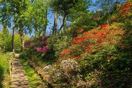 A park in the north eastern Friuli Venezia Giulia region of Italy in spring with lots of azaleas in flower