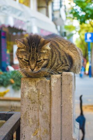 One of Istanbul's many street cats in the Moda neighbourhood of Kadikoy on the Asian side of the city