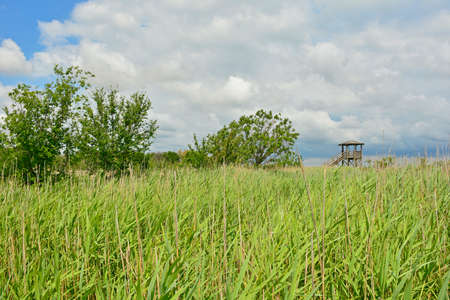 An observation tower in the wetlands of Isola Della Cona in Friuli-Venezia Giulia, north east Italy 免版税图像