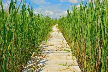 A wooden boardwalk in the wetlands of Isola Della Cona in Friuli-Venezia Giulia, north east Italy