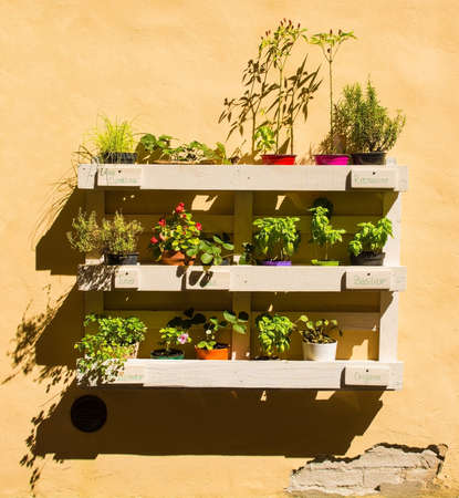 A collection of herbs and other plants displayed on a painted wooden pallet on a wall outside a house in the historic medieval village of Buonconvento in Siena Province, Tuscany, Italy