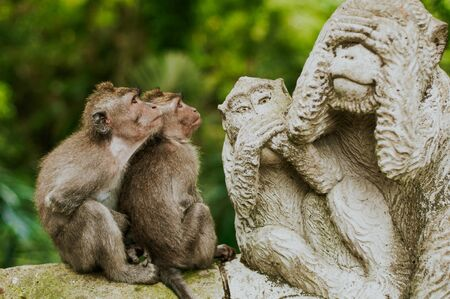 funny expression of monkeys see their statue in bali