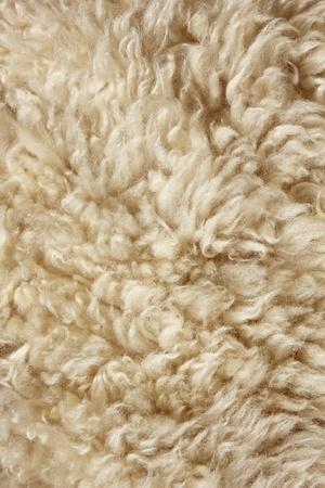 sheep skin: Close up of cream animal fur