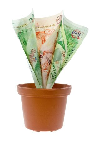 Singapore money growing in a pot isolated on white background
