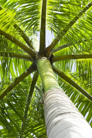 View from the base of a palm tree