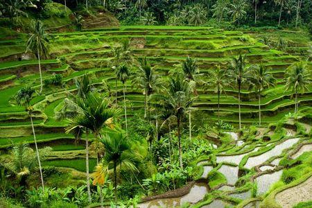Green rice terraces in Bali, Indonesia Stock Photo - 2691520