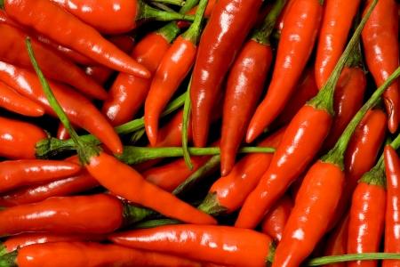 padi: Closeup of lots of red chilli padi