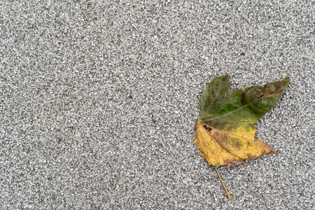 Autumnal discolored leaf on a gray background with plenty of copy space.