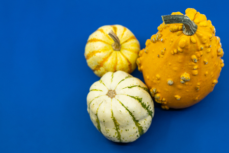 Colorful autumn ornamental gourds or pumpkins on blue with copy space for your Thanksgiving greeting in a high angle view.