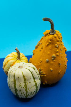 Trio of colorful ornamental fall pumpkins or gourds with patterned bi-color rinds and a pear-shaped orange fruit covered in warty nodules over a blue background.