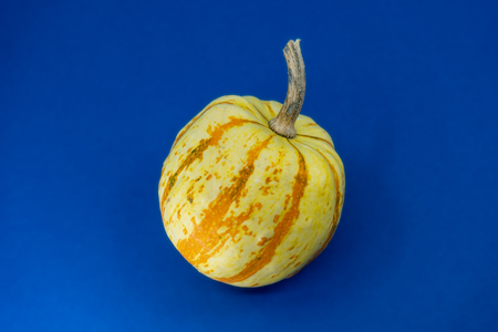 Ornamental autumn pumpkin with two-toned rind in orange and yellow and stem over a blue background with copy space.