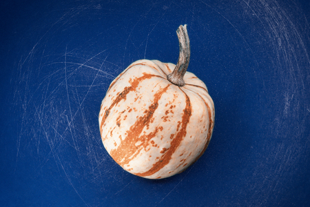 Orange and white ornamental pumpkin with stem on a textured blue background with scratches and copy space symbolic of the autumn and fall season.