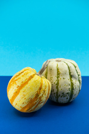 Two decorative ornamental pumpkins with variegated speckled segmented skins in orange and white over a blue and turquoise background with copy space for a Thanksgiving greeting.