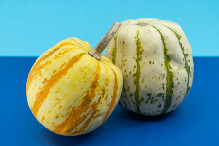 Close up on two ornamental autumn pumpkins with decorative speckled segmented skins in orange and white over a blue background for Thanksgiving themes.