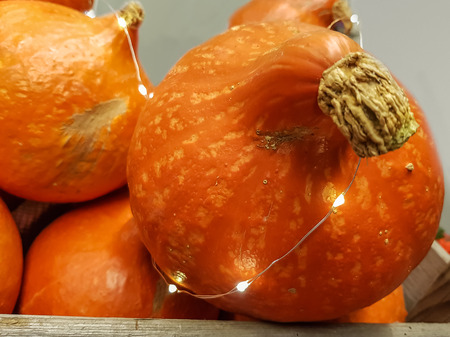 Close up on a fresh pumpkin decorated with a string of glowing lights for a festive occasion, Thanksgiving or to celebrate the autumn harvest