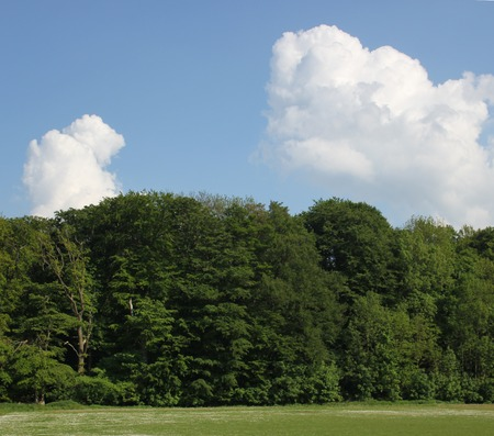 cloudscapes:   Forest with cloudscapes on clear sky.