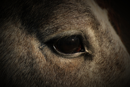 vignetting:   Closeup of an eye of a horse. Vignetting was added.