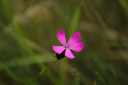 image created 21st century:   A pink flower head with defocused background.