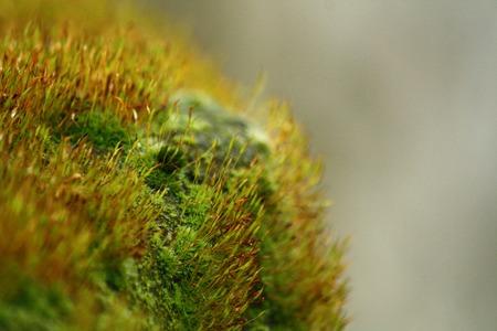 image created 21st century:   Macro of moss, growing on rocks. Stock Photo