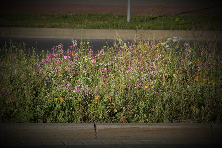 image created 21st century:   A variety of colorful flowers and herbs on a central reserve inside the city. The image was shot in Germany. Vignetting was applied.