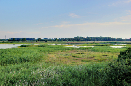 greifswald:   Panorama showing wetlands near Greifswald, Mecklenburg-Vorpommern, Germany, full of animals.