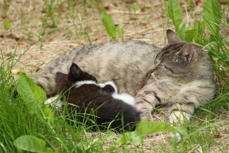 image created 21st century:   Tabby with defocused black and white kitten lying in grass. Stock Photo