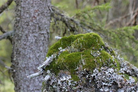 image created 21st century: Moss and lichen with a stem in the background. Stock Photo