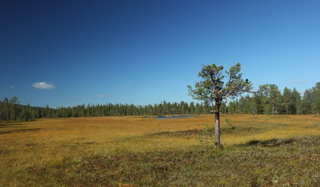 meagre: Bog with pine and lake in Gybbmyren near S?len, Dalarna, Sweden.