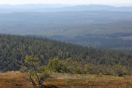 scandinavian peninsula: Small birch and view from the mountain H?gfj?llet near S?len, Dalarna, Sweden.
