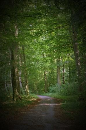 greifswald: Road through NSG Elisenhain, nature reserve near Greifswald, Mecklenburg-Vorpommern, Germany.