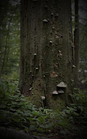 decomposed: Tronco de un �rbol muerto en descomposici�n por hongos. Foto de archivo