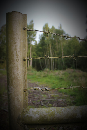 barbed wire fence: Old fence with barbed wire.