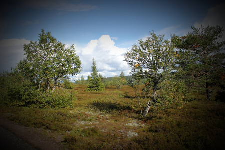 meagre: Heathlands besides Kungsleden (The Kings Path) in Dalarna, Sweden. Stock Photo
