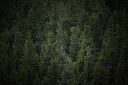 image created 21st century: Background of a mountain forest.
