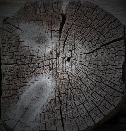 image created 21st century: Cross section of a wooden log.