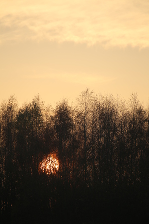 descends: The sun descends behind an autumnal forest.