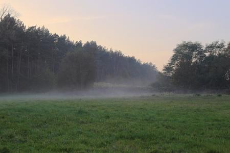 hdri: HDRI of a fog over meadow in the evening.