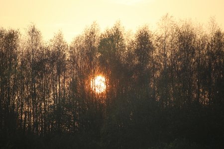 meagre: The sun descends behind an autumnal forest.