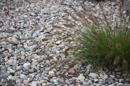 hassock: Hassock growing in a stone garden. Stock Photo